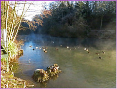 A cold morning in Kent (GABOLY) Tags: ducks moorhen lake water mist sun morning kent england january 2017 coots