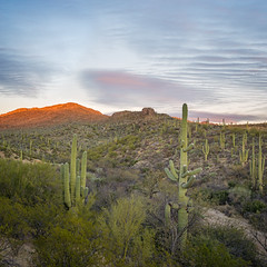 stillness (bugeyed_G) Tags: sunset desert cactus saguaro national park arizona southwest tucson nature outdoors sky vertorama stillness quiet quietude tranquil peaceful serene