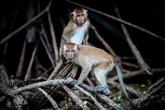 monkeys-1008
