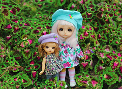 Sumie & Sae 🌱 (Deer Thistle) Tags: latiyellow latiwhitesp latidoll lati wintertan gloomygarden lily cookie sumie sae garden outdoors