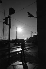 HELSINKI IS LONESOME (danieltim.net) Tags: blackandwhite urban filmphotography personalseries atmosphere mood helsinki winter shadows sun light contrast silouettes cityofshadows rolleifilm retro100tonal expiredfilm