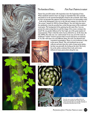 the Function of Form...Part Four: Patterns in Nature