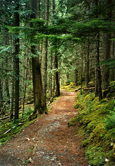 forest path (Mr.  Mark) Tags: road trees green nature forest landscape woods scenery path markboucher
