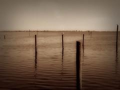 Lake Tohopekaliga, Kissimmee, FL (Ledio (mostly away)) Tags: lake sepia landscape empty abandon vignette emptiness tohopekalika peisazh piesazh ledioveseli