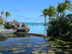 A Pond, a Pool, the Ocean (at Bora Bora Nui) (Hazelbrae) Tags: pool pond view lillies tahiti sheraton borabora frenchpolynesia