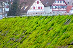 Mossy Rooftop. (allanimal) Tags: tag3 taggedout germany geotagged moss tag2 tag1 fachwerk badenwrttemberg schwbischhall allanimal geo:lat=49110721 geo:lon=9734392