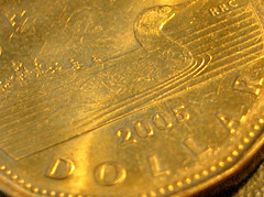 The most common Loonie reverse image depicts a loonie (water fowl) swimming on a lake