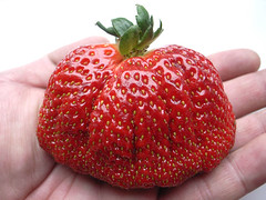 strange fruit (superlocal) Tags: food strange weird yummy strawberry shaped large tasty korea supermarket delicious photoblog korean seoul noface mutant oversized shape photolog iatethis inmyhand dalki superlocal seoulphotoblog koreanphotoblog koreanphotolog inmyhands superlocalfood