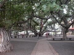 DSCN3219 (Joshua & Amber) Tags: hawaii maui banyantree