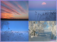 Blue winter (Vaeltaja) Tags: blue trees winter sky moon lake snow clouds suomi finland oulu lumi talvi kuu pilvet jrvi sininen puut taivas