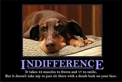 Indifference (Mr. Physics) Tags: dog pet pets dogs animal animals funny dumb joke humor lazy motivation doberman indifference msoller reddoberman