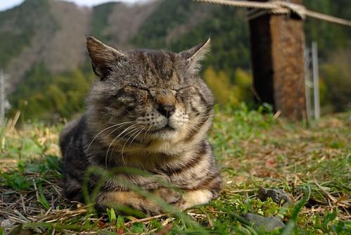 CAT'S LIFE #2