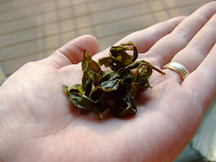 oolong leaves after steeping in a palm of a hand