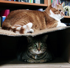 Upstairs Downstairs (Kevin Steele) Tags: toby orange cats cat orangecat box tabby kitty kitties top20catpix furryfriday xena olivetabby orangeandwhitecat boxparty2006