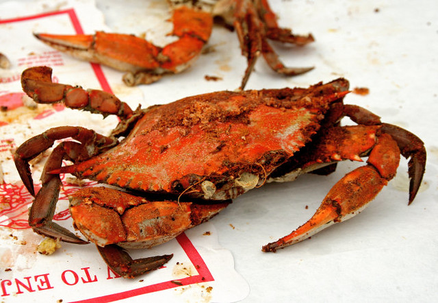 Maryland Blue Crab, Cooked