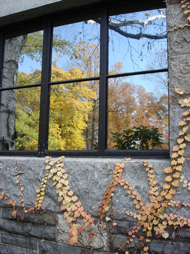 Fall Leaves, Storm King Arts Center