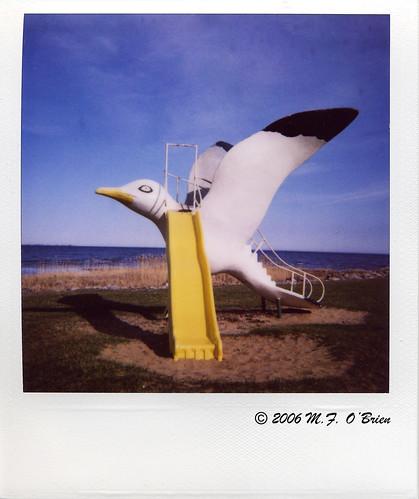 gull slide