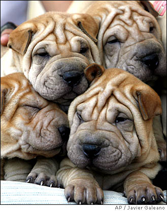 mini walrus puppies - group picture, image by tag - keywordpictures ...