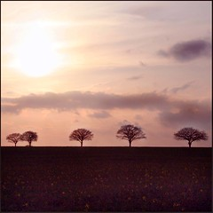 Field of dreams (janinehealy) Tags: trees sunset red orange cloud sun tree slr nature field clouds canon 350d 5 five fields janine sillouhette janinehealy