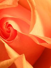 Rose Petal Twirl (dragonflysky) Tags: pink light roses macro beautiful rose petals quality peach blumen rosas fantasticflowers