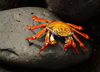 crabbbbbb