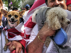 who said dogs can't smile? (Kris Kros) Tags: california ca usa dog chihuahua public smile cali america la us losangeles interestingness cool interesting nikon pix day flag labor alien protest americanflag 2006 demonstration socal poodle illegal kris immigration hdr jjj laborday kkg nikoncoolpix may1 3xp photomatix illegalalien kros kriskros kk2k kkgallery