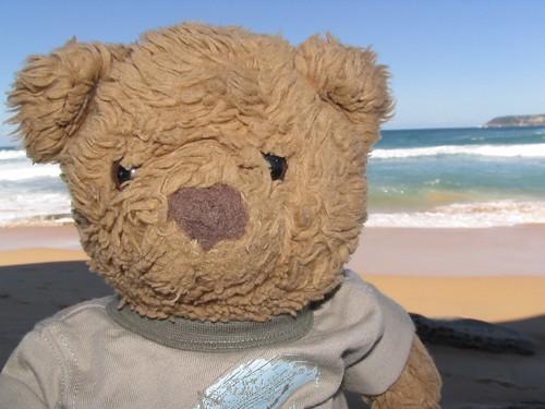 Bradley Bear at North Curl Curl Beach, Sydney