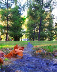 (radioher) Tags: park blue parque autumn orange cold colour macro green fall love water argentina beautiful leaves forest river hojas stream colours perspective may perspectives mendoza bosque april otoo perspectiva inlove cuyo beautifulcolours