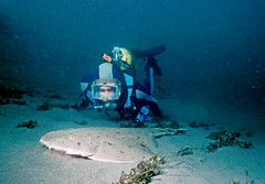 Chris with Angel Shark (ScottS101) Tags: california nature angel ilovenature shark pacific wildlife scuba diving allrightsreserved californica ilovetheocean squatina copyrightscottsansenbach2008