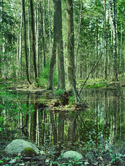 Magic forest: Green (Sameli) Tags: wood trees light shadow paisajes reflection tree green leave nature water leaves rock stone forest reflections suomi finland lights woods rocks shadows mush stones magic fantasy swamp bond dreamy bonds magical forests tale