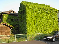 Ivy-covered stronghouse in Kiryu in April (Joel Abroad) Tags: plants japan ivy merchant kiryu stronghouse