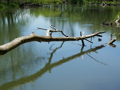 (Riverside Dreamer) Tags: usa nature water river indiana whitewaterriver connersville