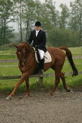 working canter (nick3216) Tags: uk horse caballo cheval unitedkingdom cal chestnut pferde cavallo cavalo hest hevonen paard 馬 häst dressage warmblood gelding лошадь koń hannoverian myerscough