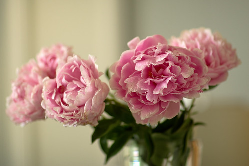 rainy day peonies by Pear Biter on flickr