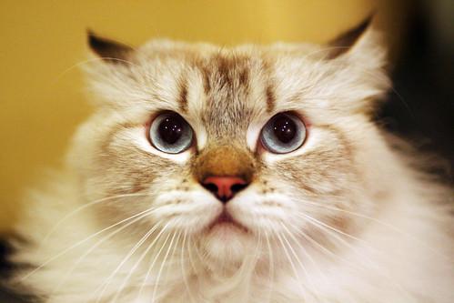 Gato odio