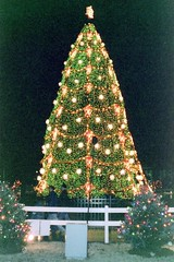 DC: National Christmas Tree