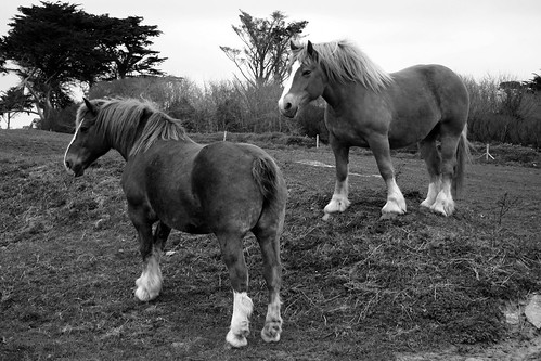 WorkHorses / Chevaux de trait