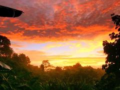 Dawn above the banana jungle (studio matahari lutong) Tags: blue red sky orange beauty leaves yellow clouds sunrise wonder dawn colorful asia nuvole albaluminis magic banana jungle hour aurora sarawak malaysia borneo tropical limbang rocio gettingupearly