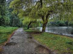 Rain in the park. (finnigh) Tags: trees green nature water rain outdoors landscapes woods britishcolumbia shoreline lakes parks perspectives victoria paths hdr 3xp
