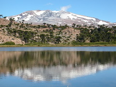 Copahue + Laguna Escondida (Mono Andes) Tags: mountain lake argentina trekking landscape volcano backpacking reflejo andes araucaria montaa cordillera volcan neuqun volcn araucariaceae mountainsandes cordilleradelosandes volcncopahue