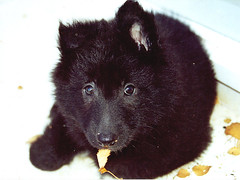 Luca at 8 weeks