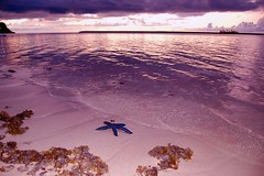Starfish in the sand (rob surreal) Tags: ocean sunset sky beach clouds starfish guam photoofweekphotographymadness