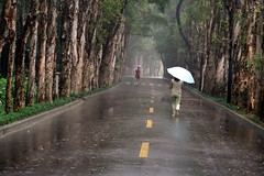 Walking home (Alex Vinter (aka Wam Mosely)) Tags: china road park woman wet rain forest umbrella walking lafotodelasemana fuzhou kiss2 kiss3 kiss1 kiss4 kiss5 lfs062006 fragmentsofcivillsation