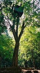 cotiago wildlife sanctury lookout tower