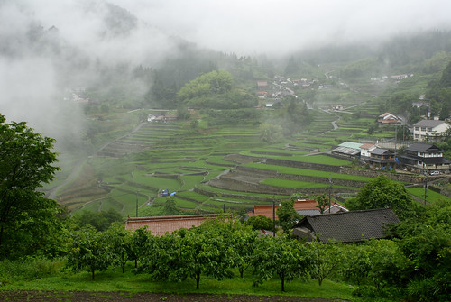 Ini terraced fields. overall view