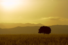 Warm (Victoriano) Tags: light cloud tree nature backlight landscape gold spain scenery top country granada land faves jaen agricultural lamancha fivestarsgallery flogr