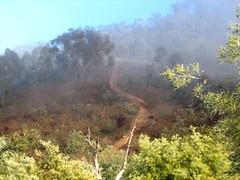 Mountain mist (Denis Fox) Tags: mist mountain nature fog landscape frost australia morningwalk maccove newphotographer