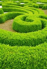 brush (krzysiek and ania) Tags: summer green colors beauty garden cool bush colours shapes poland polska brush zielony krzak wiosna zieleń bialystok podlasie mozaika rośliny ogród labirynt zielono podlachia branicki żywopłot