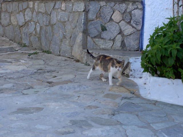 A cat of Khora (Alonissos) by Luigi Rosa