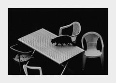 Untitled... (l1ze) Tags: blackwhite blackandwhite canon canoneos5dmkii cat dk danmark denmark monocrome moen mn summer blackandwhitephoto blackandwhitephotos bw chair chairs l1ze lennartjoern table